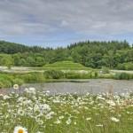 Orroland wildflower meadow