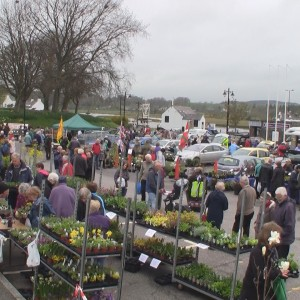 Kirkcudbright Spring Plant Fair @ Harbour Square Car Park | Kirkcudbright | United Kingdom